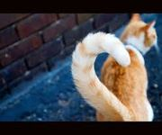 Cat Body Language and Behavior tips | Cattify your life