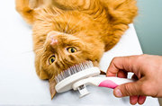 How to Keep Cat's Coat Shiny