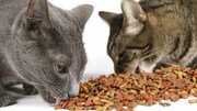 Tips for Cat lovers